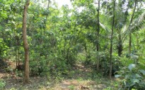 1 acre land for sale at Mulayam near Mannuthy, Thrissur