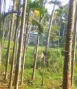 39 Cent Residential Land With House for Sale Irinjalakuda Town
