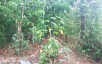Land for sale in Puthuppally, Kottayam