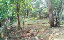 33 Cents Land for sale in Pala, Kottayam