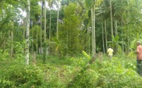 20 Cents Land for sale at Irinjalakuda, Thrissur