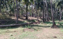 5 cent land for sale near Muzhappilangadu, Thalassery