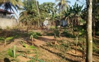 18 cent land for sale in Kothakulangara, Angamaly