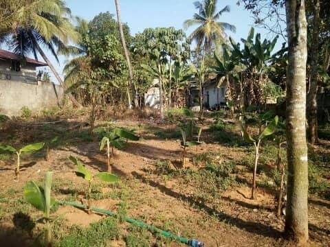 18 cent land for sale in Kothakulangara, Angamaly